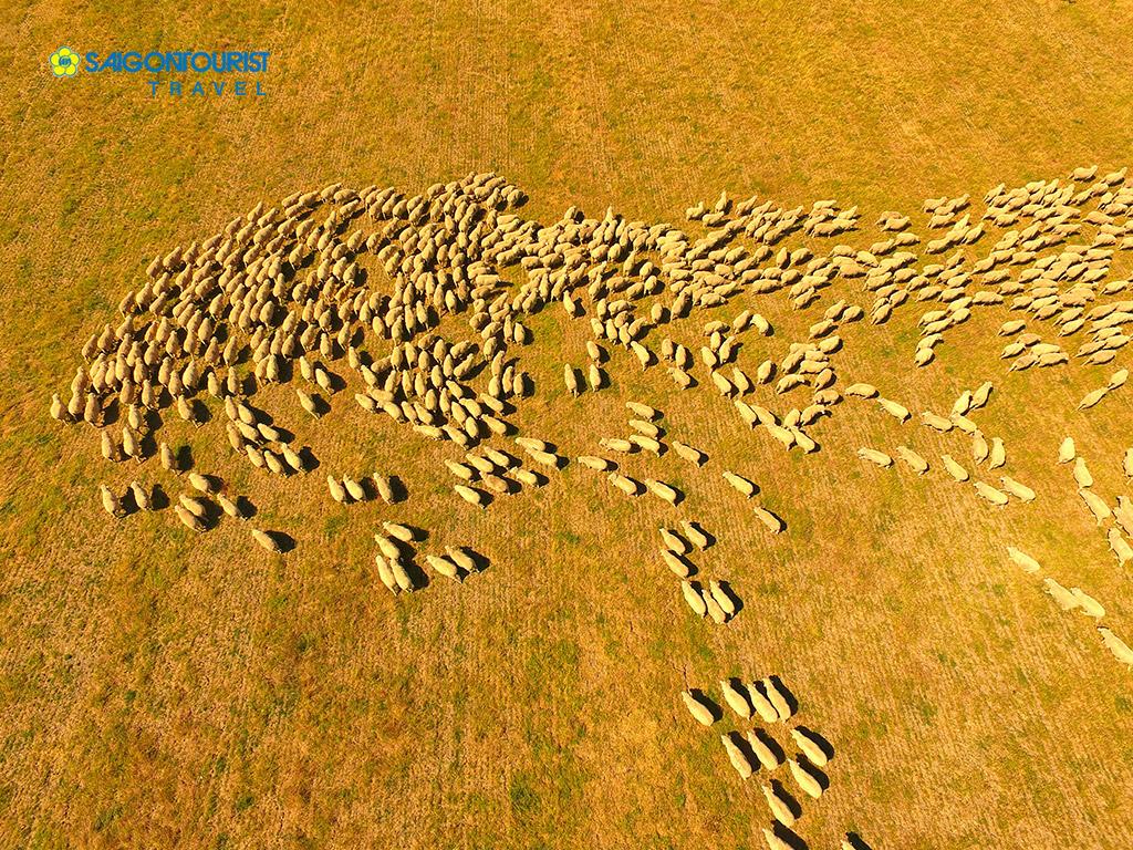 Kết quả hình ảnh cho một bầy hồ ly